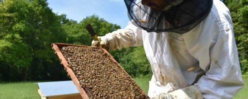 ruches-au-chateau-de-chamerolles-abeilles-apiculteur-julien-_4350112